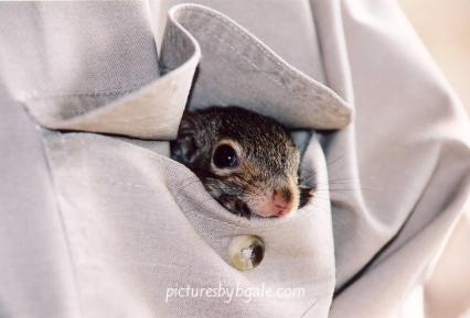 pocketsquirrel